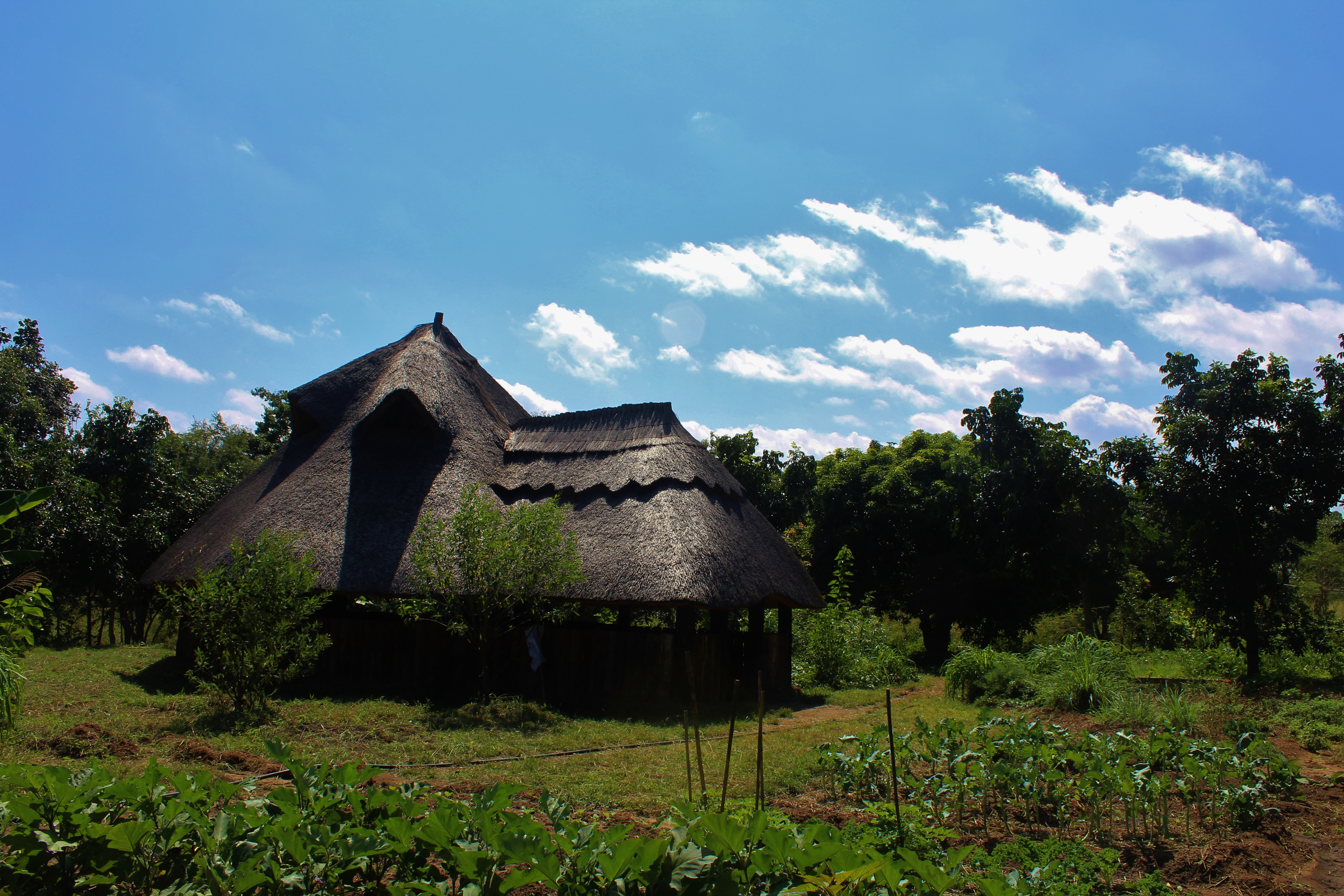 A permaculture farm near Kumbali village where my friend Kristie interned