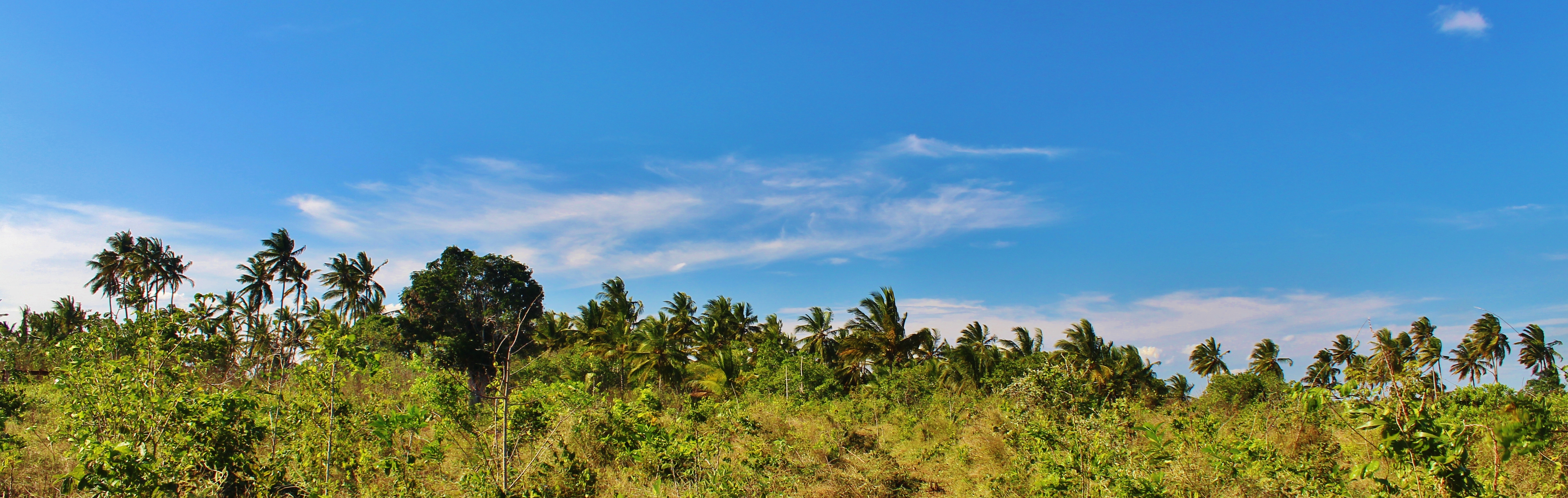 A forest of palm trees in Mkuranga, about an hour south of Dar es Salaam